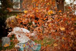 今年のマサチューセッツ州の紅葉は色鮮やか