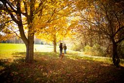 マサチューセッツ州の紅葉は今がピーク