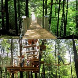 マサチューセッツ州郊外に森のアトベンチャー公園がオープン