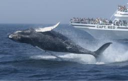 クジラに関する約40箇所のアトラクション「ホエールトレイル」